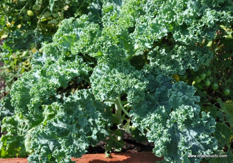 homegrown kale